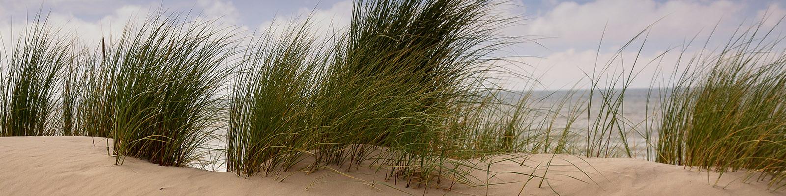 Dunen Noordwijk aan Zee